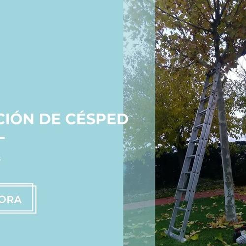 Mantenimiento de jardines en Valladolid | Salvajardín