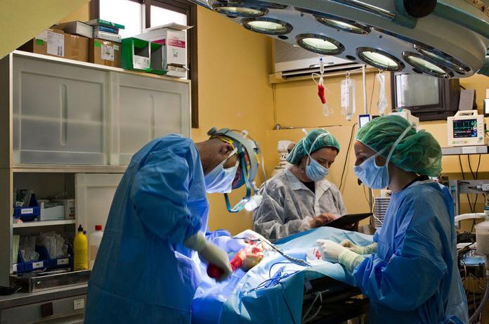 Cirugía: Especialidades de Hospital Veterinario Desvern