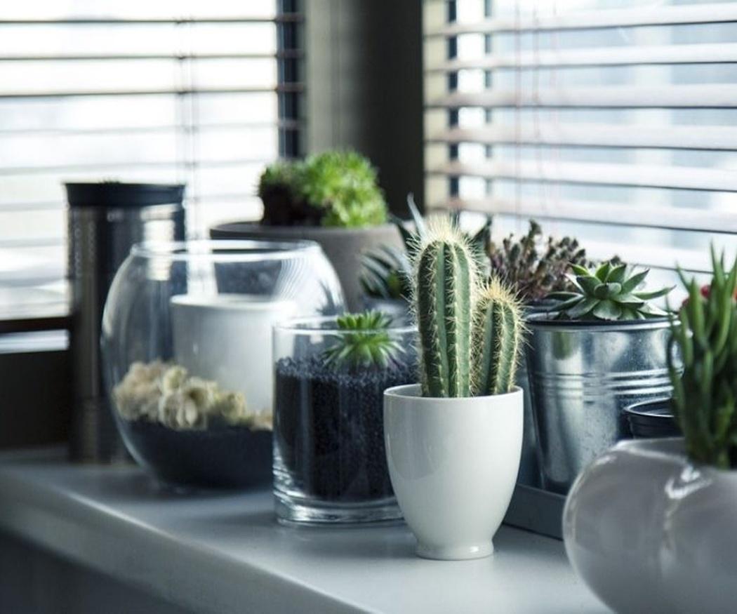 Protege tus plantas de las bajas temperaturas
