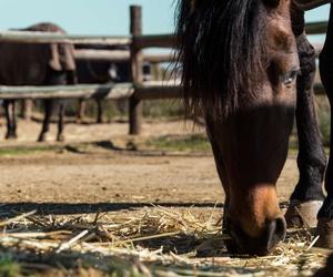 Paseos a caballo en El Maresme