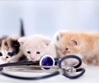 Servicio a domicilio: Servicios especializados de Arca Veterinaria