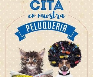 CLOT VETERINARIA