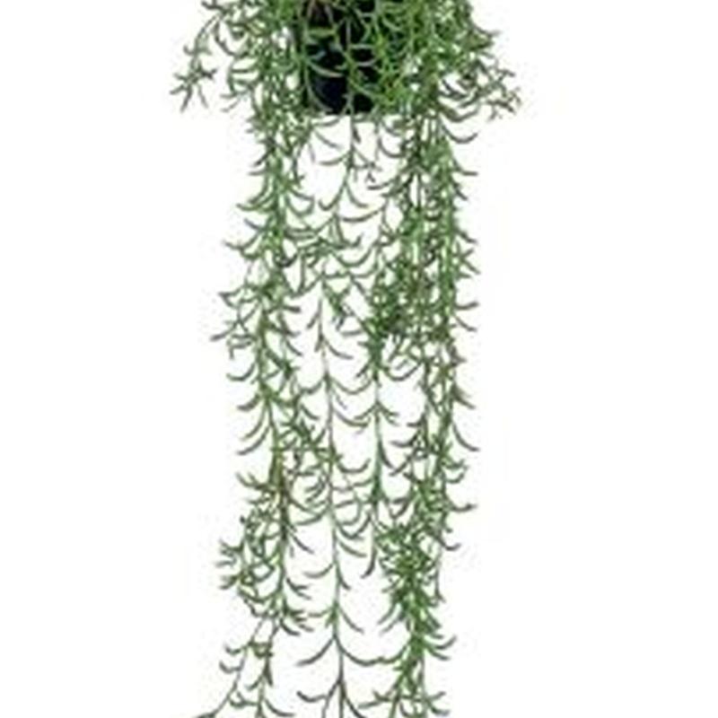 Planta decorativa techo 423976: ¿Qué hacemos? de Ches Pa, S.L.