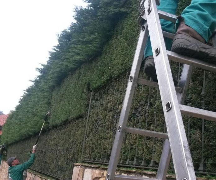 Podas y talas: Servicios de Jardinería IGLE-MAN