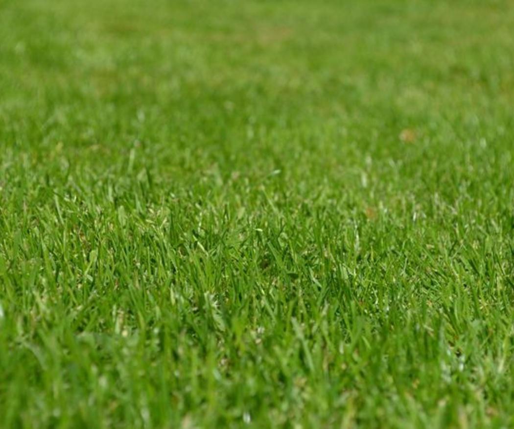 Ahorro importante al instalar césped artificial en el jardín