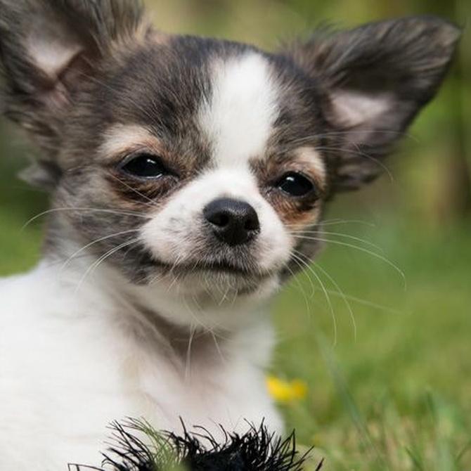 Los beneficios de la adopción de mascotas