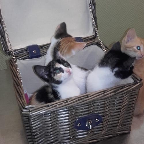Medicina y cirugía del gato, dermatología, diagnóstico por imagen, vacunaciones y nutrición. Tu gatito en buenas manos!