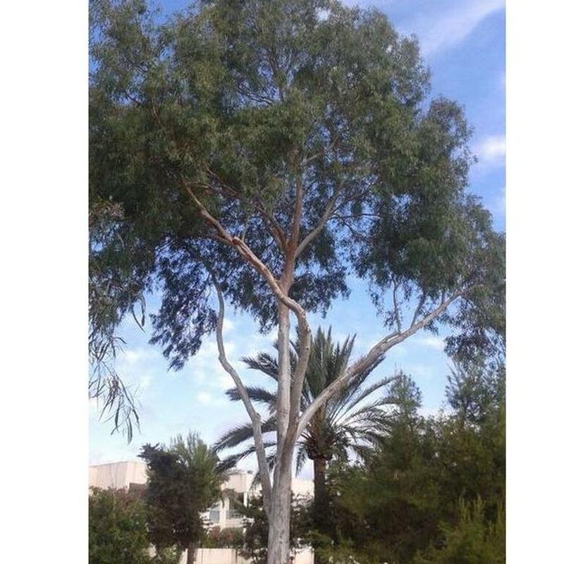 Podas de árboles y palmeras : CATÁLOGO de Tamar Gardens