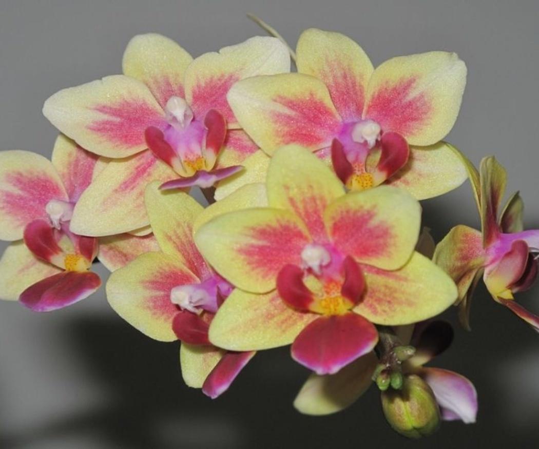 Consejos para elegir flores para un hombre