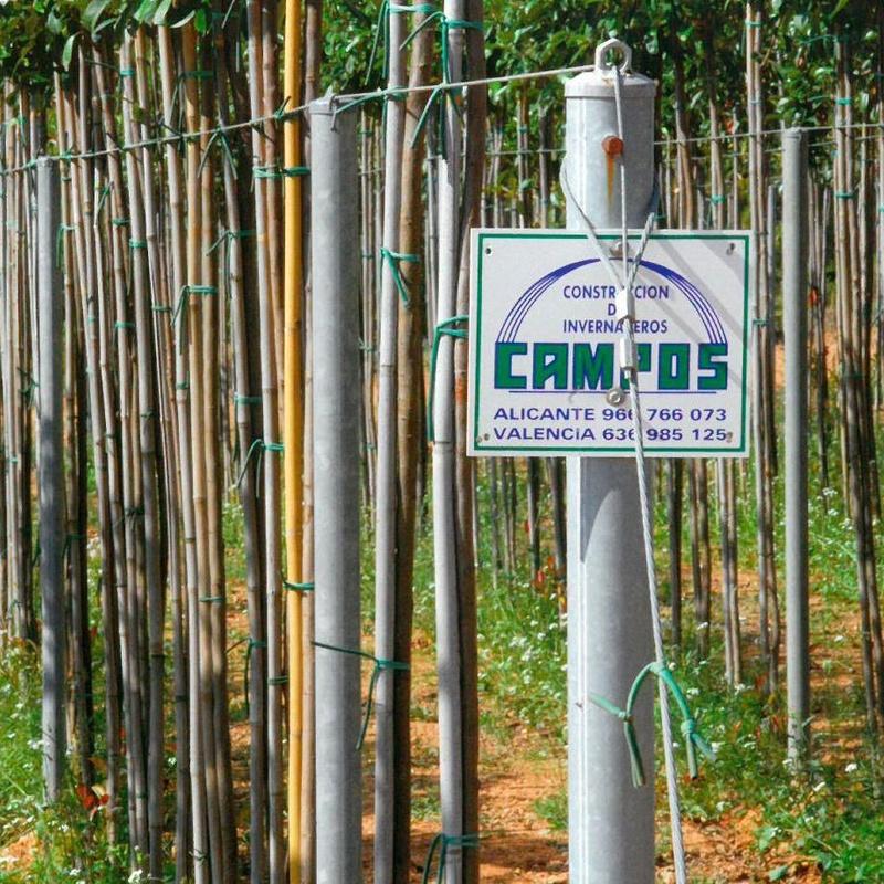 Espalderas: Invernaderos de Invernaderos Campos