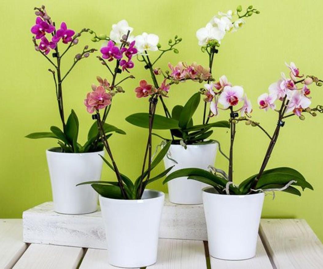 Cuida bien de las orquídeas
