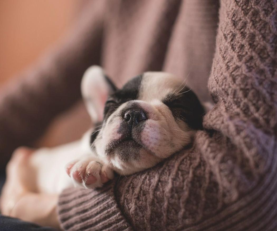 Los mejores cuidados para tu mascota