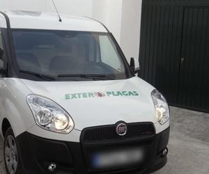 Servicio de control de plagas en Sevilla