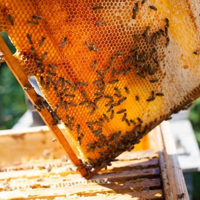 La miel y sus dulces beneficios
