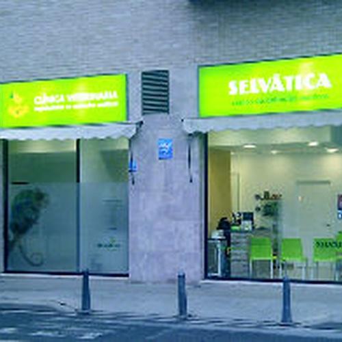 Veterinario de aves en Valencia | Clínica veterinaria Selvätica