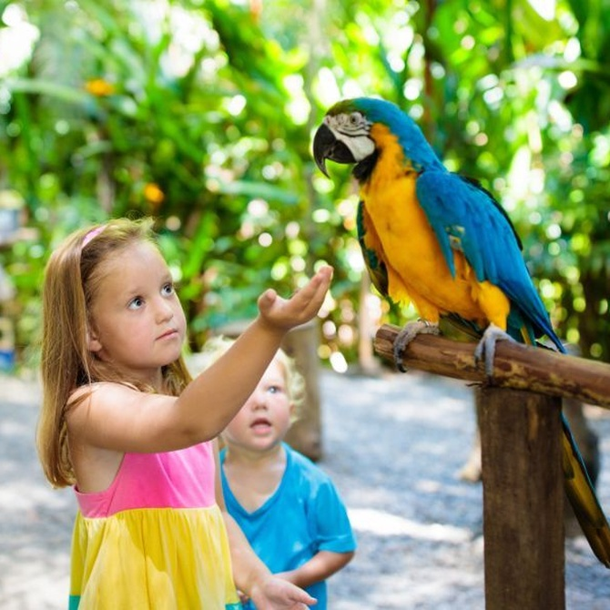 Naturaleza y niños, el tándem perfecto