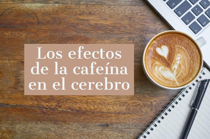 Los efectos de la cafeína en nuestro cerebro