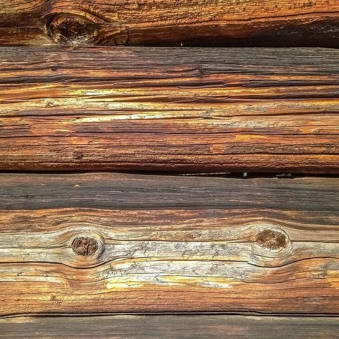 Consecuencias de tener termitas en casa