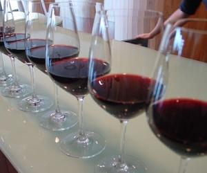 Los mejores vinos de Cataluña