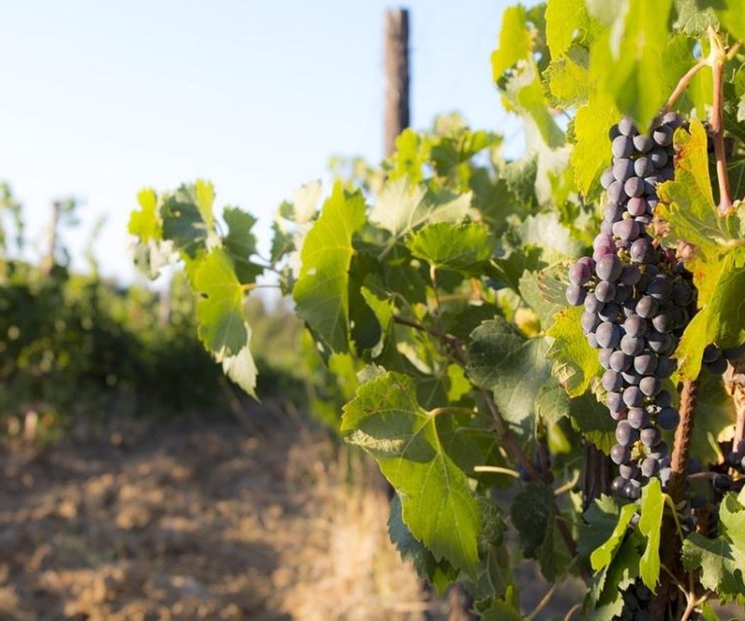 Las principales regiones vinícolas de Francia (II)