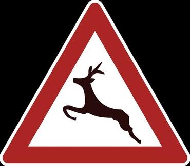 Los jabalíes provocan el 33% de los accidentes de tráfico con animales, según un estudio
