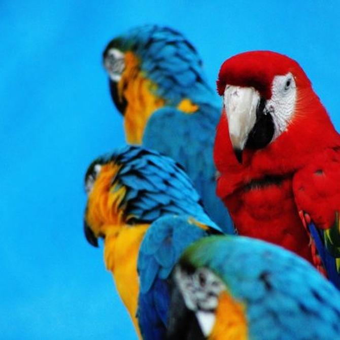 El auge de los animales exóticos como mascotas