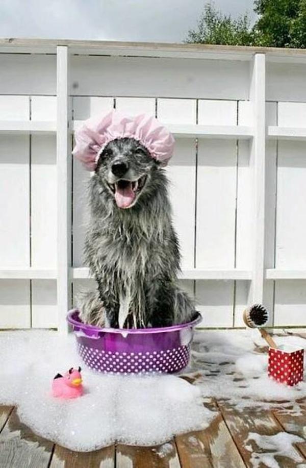 Baño: Servicios de Pets-R-Us