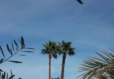 Podas de árboles y palmeras