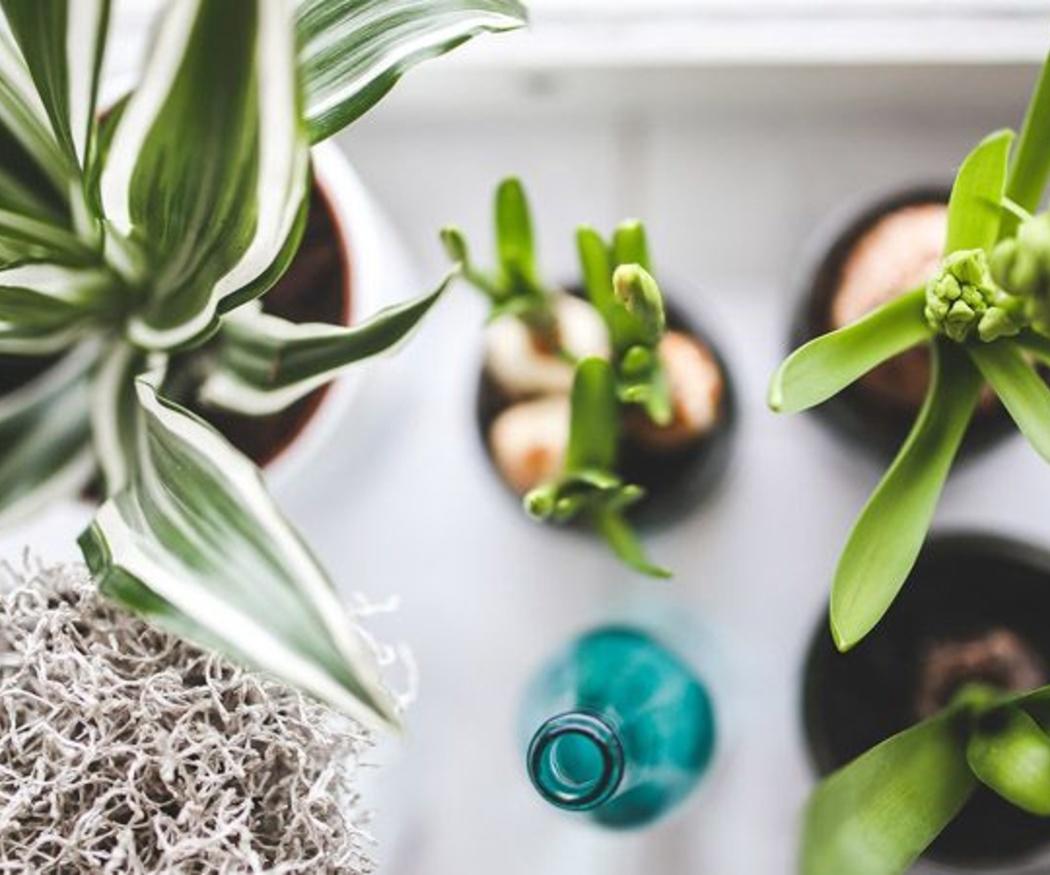 El cuidado de las plantas de interior