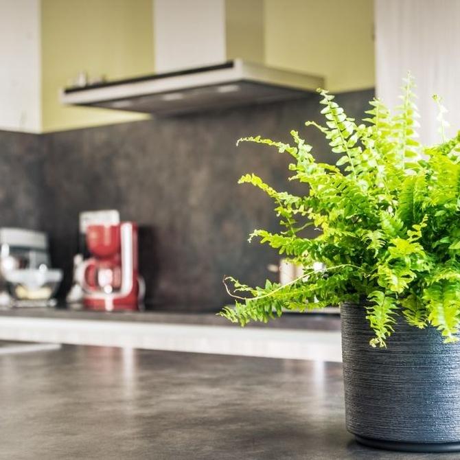 Consejos para cuidar la campana de la cocina