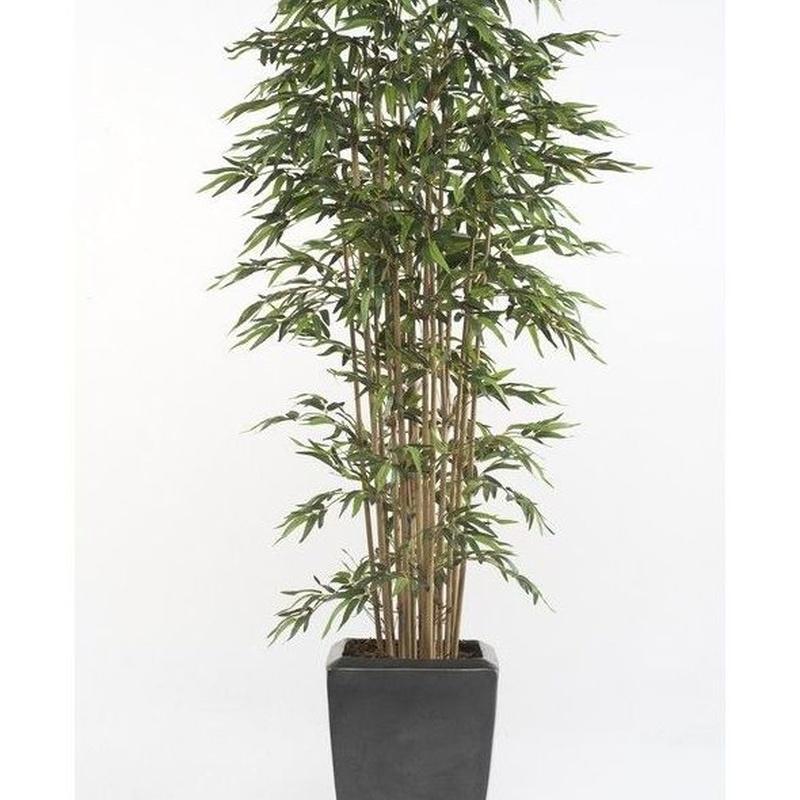 Árbol bambú acabado Premium: ¿Qué hacemos? de Ches Pa, S.L.