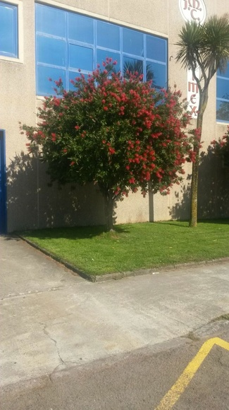 Mantenimiento de jardines: Servicios de Jardinería IGLE-MAN