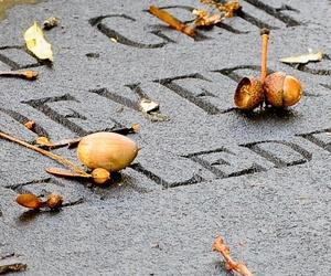 Exhumación de cuerpos