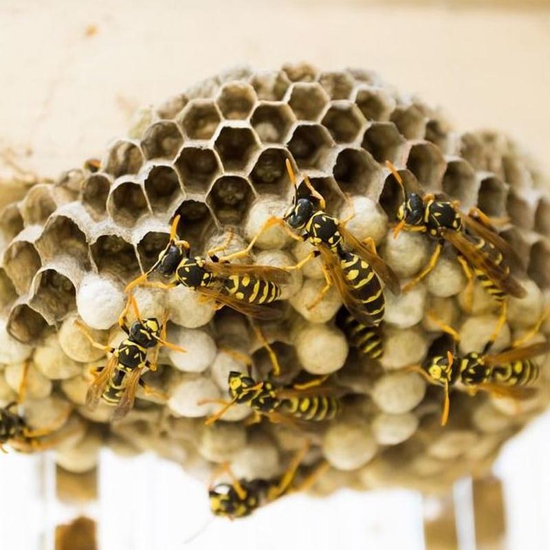 Otros insectos : Servicios  de Tresdes