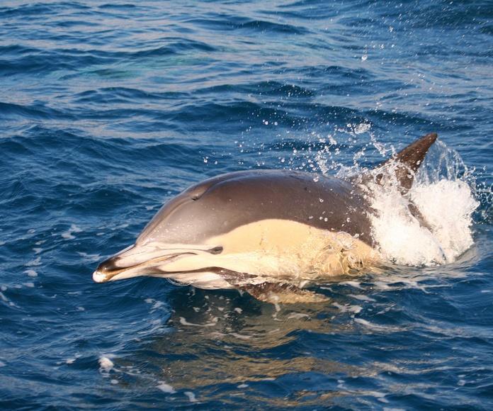Iniciación a la Investigación con Cetáceos: Excursiones de Turmares Tarifa