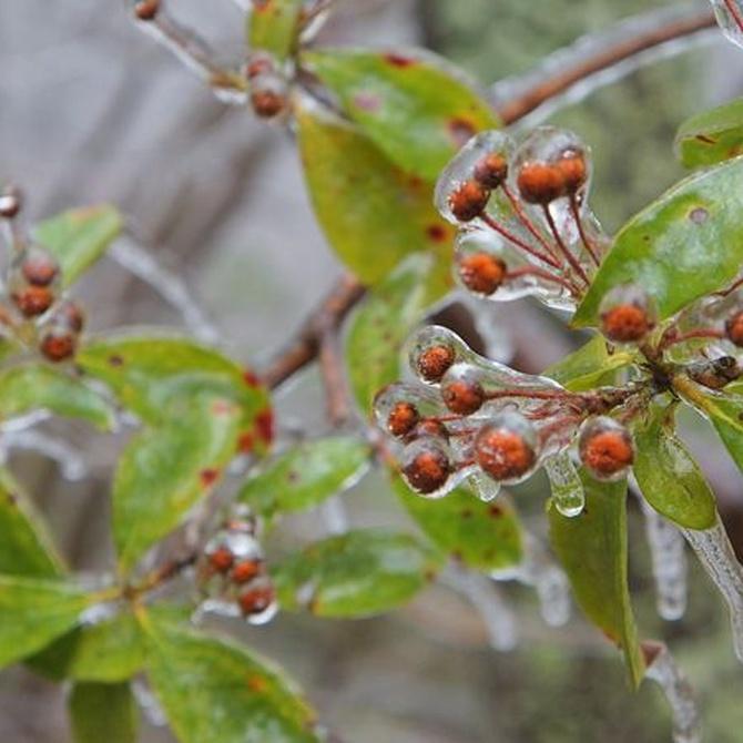 Cuidados de las plantas durante el invierno