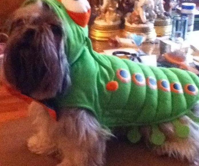 Moda y complementos para mascotas: Servicios de Arabacan