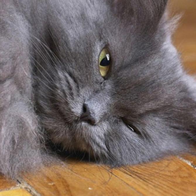 Respuestas para algunos comportamientos de los gatos