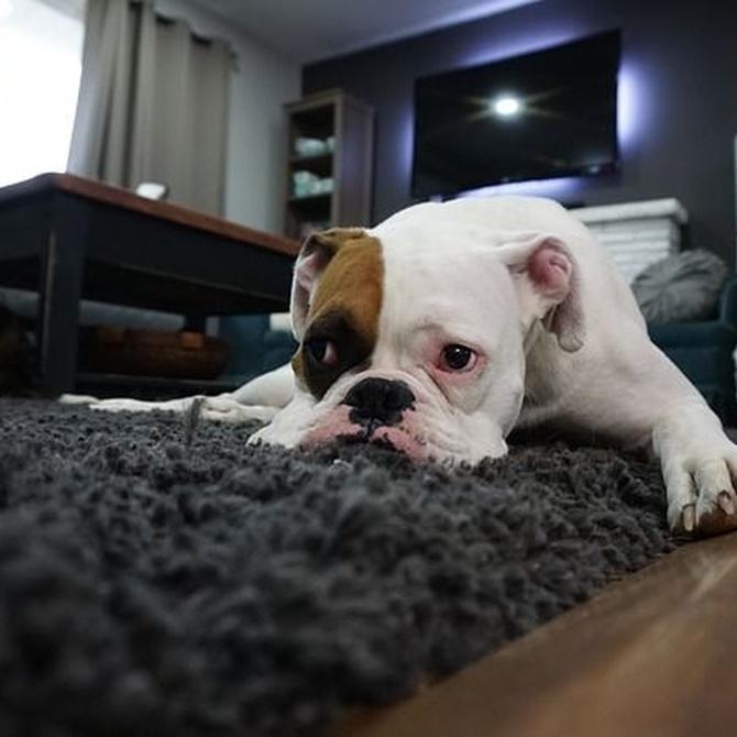 Sobre el correcto lavado de alfombras