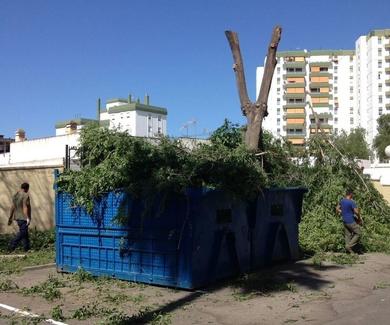 Poda y tala en Cádiz