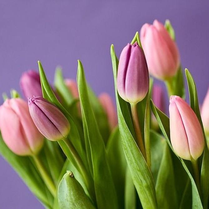 Una flor nunca está de más