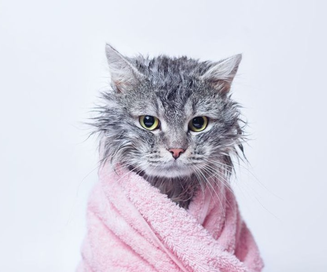 Pautas para el cuidado e higiene de tu gato