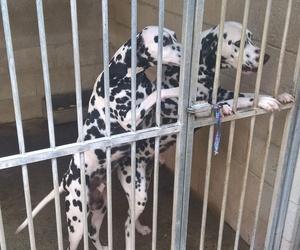 Protectora de perros en La Línea de la Concepción