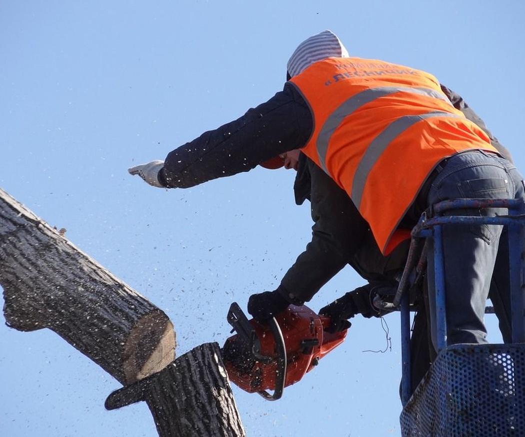 Los árboles enfermos y otros problemas típicos