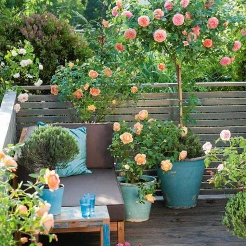 Composición de plantas: Productos y servicios de Eiviss Garden