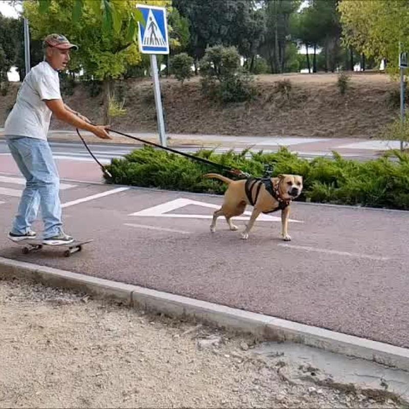 Servicio skate: Servicios de Peludos Al Agua