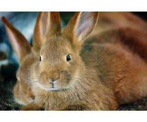 Especialidades conejos