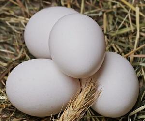 Venta de huevos frescos
