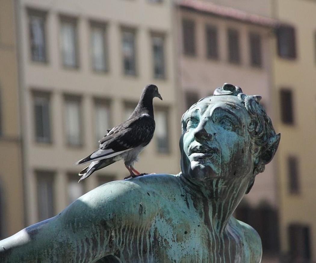 ¿Sabes cómo funcionan los sistemas anti aves?