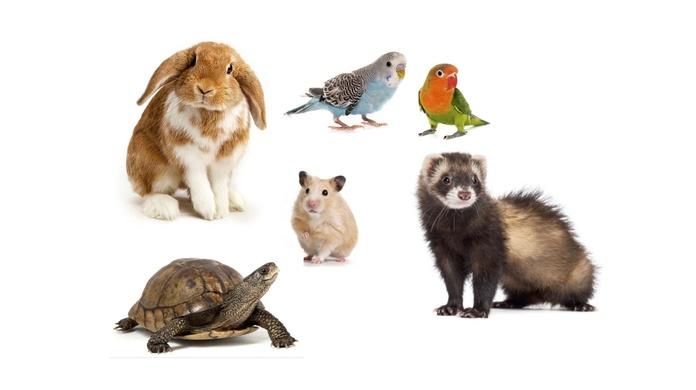Consulta y Tratamientos de Animales exóticos: Servicios de Clínica Veterinaria Cachorros
